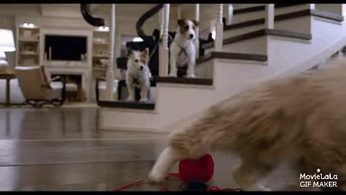 Watch and share Nononono GIFs by movies on Gfycat