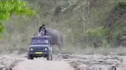 """Watch """"Heh, just kidding guys!"""" (reddit) GIF on Gfycat. Discover more related GIFs on Gfycat"""