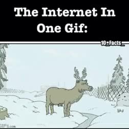 Watch and share The Internet In One GIFs on Gfycat