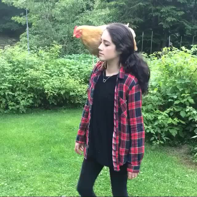 Watch and share Chick And Chicken (reddit) GIFs on Gfycat
