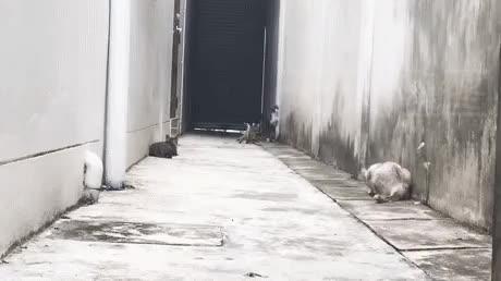 Parkour cat runescape GIFs