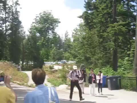 hitmanimals, When Raccoons attack (reddit) GIFs