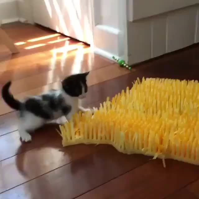 Watch and share Kittens GIFs and Kitten GIFs on Gfycat