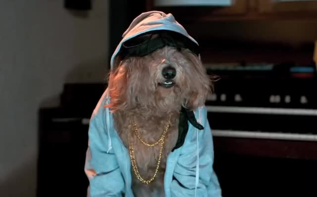 Watch and share Hip Hop Dog GIFs and Sup Dawg GIFs by Reactions on Gfycat
