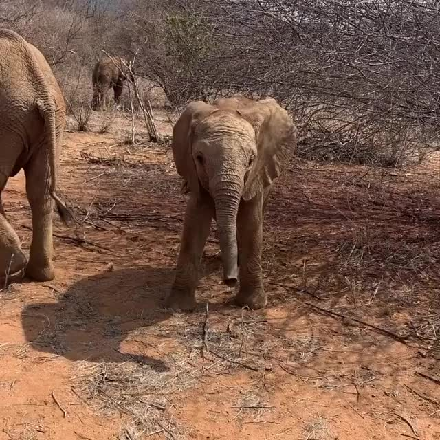 Watch and share Baby Elephant GIFs by vani  on Gfycat