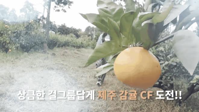 Chỉ là hái quýt thôi, sao Hàn vẫn khiến fan ngất ngây vì không khác gì quay quảng cáo triệu đô