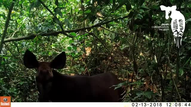 Watch and share Ituri Forest GIFs and Africa GIFs on Gfycat