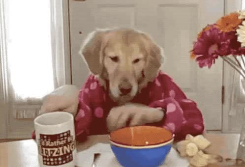 Watch this drinking GIF by GIF Queen (@ioanna) on Gfycat. Discover more best, breakfast, cafe, coffee, dog, drink, drinking, epic, funny, good, lol, morning, pet, puppy, pyjamas, sunday, trending, up, viral, wake GIFs on Gfycat
