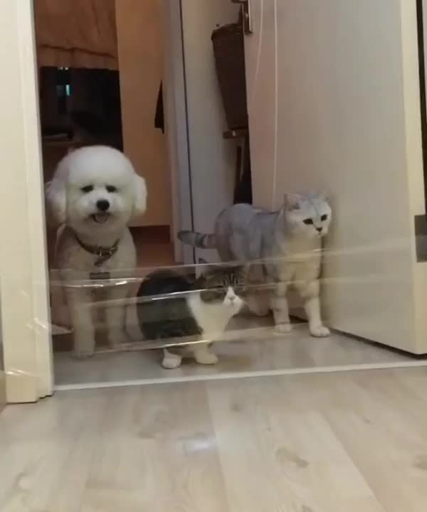 Watch Kitty logic vs doggo logic GIF on Gfycat. Discover more Chris_Isur_Dude, dog GIFs on Gfycat