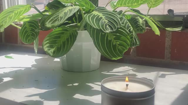 Watch and share Candle TL GIFs on Gfycat