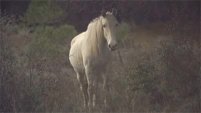 Watch this horse GIF on Gfycat. Discover more animals, curious horse, equestrian, horse, horse racing, my gif, nature, pasture GIFs on Gfycat