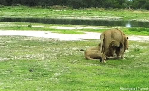 Watch Zoo GIF on Gfycat. Discover more related GIFs on Gfycat