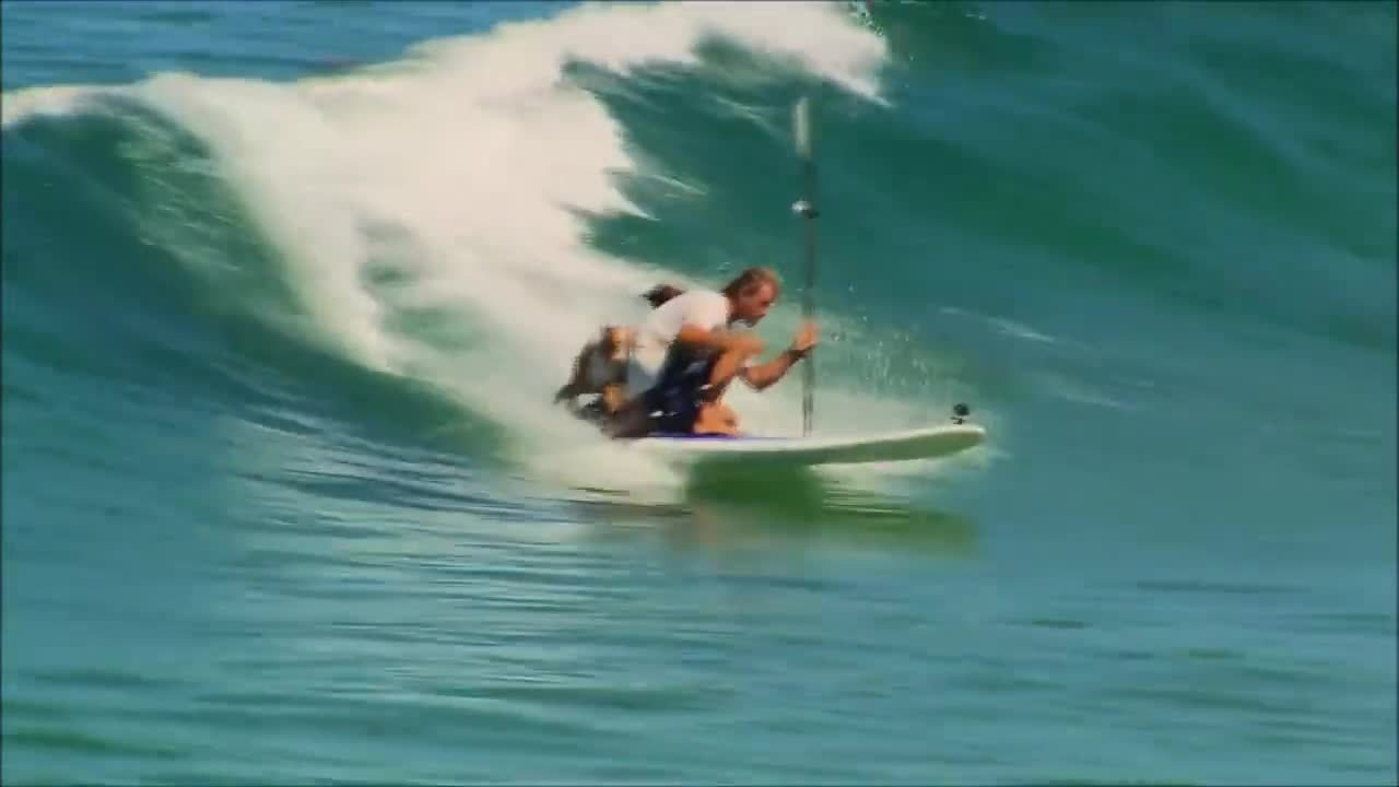 cool, dogs, surfing, How I Play With My Dogs GIFs