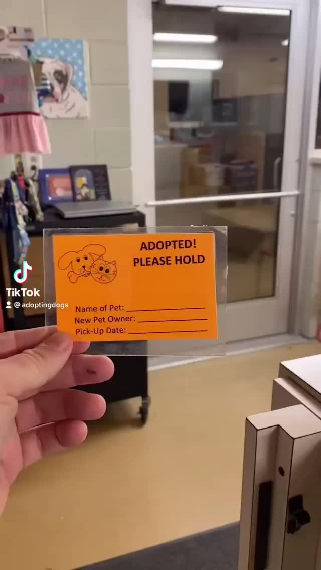 Watch and share Adopted Tippytaps GIFs by noraad on Gfycat