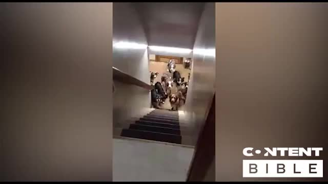 Watch Dogs wait patiently for their names to be called! GIF on Gfycat. Discover more Dog, Original, Training, Viral, animal, animals, bible, cute, food, hallway, house, lad, ladbible, pet, skills, stairs, thecontentbible, theladbible, trending, viralvideos GIFs on Gfycat