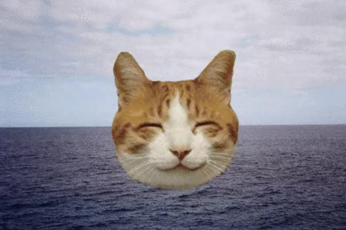 Watch and share Trippy Kitty GIFs on Gfycat