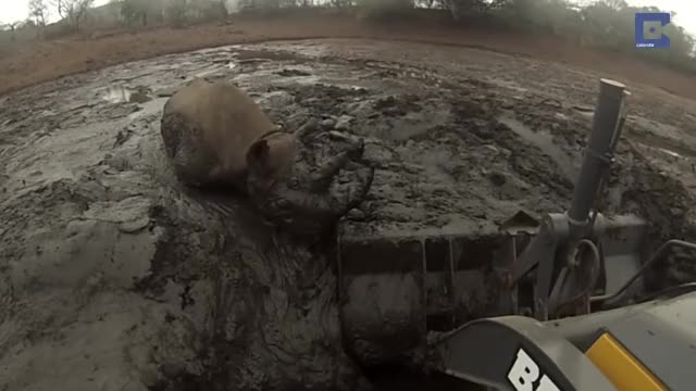 Watch Rhino Stuck In Mud Rescued By Digger short gif GIF by skydiver on Gfycat. Discover more Africa, Caters Clips, Excavator, Faithinhumanity, Helping, Humansbeingbros, Mademesmile, Mud, Nature, News & Politics, Rhino, Wildlife, catersnewsagency, caterstv GIFs on Gfycat