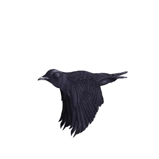 Watch and share Crow GIFs on Gfycat