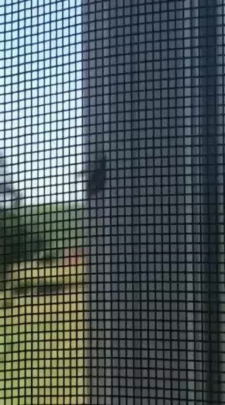natureismetal, Wasp carrying away a caterpillar GIFs
