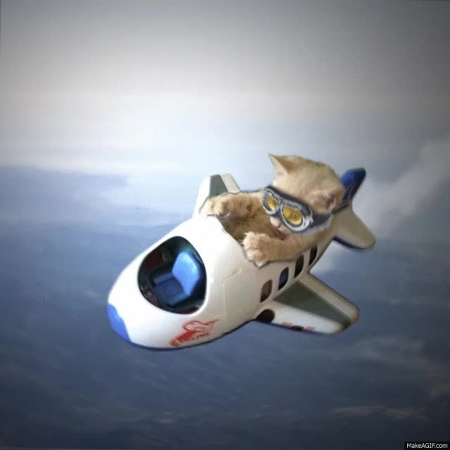 Watch and share Cat Pilot GIFs on Gfycat