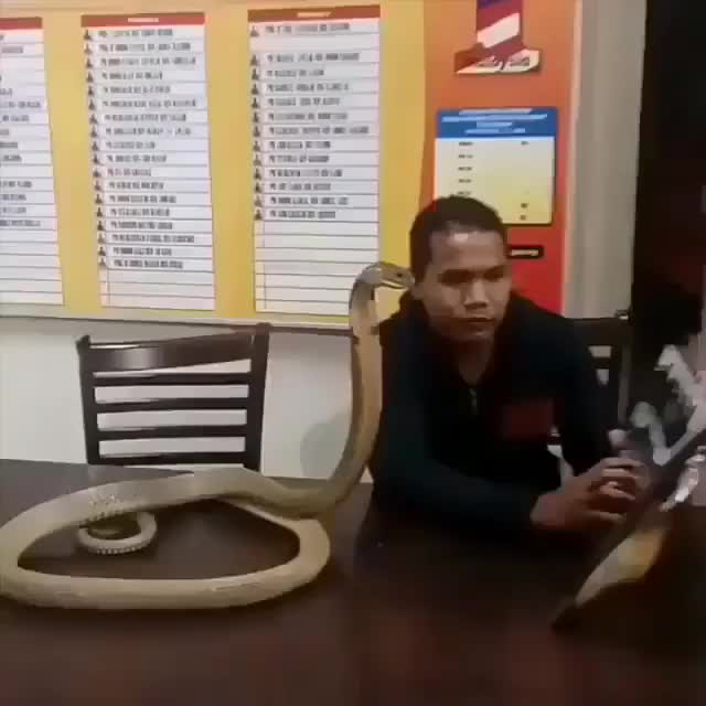 Guy reading to his cobra GIFs