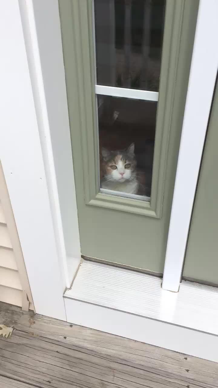 gfycats, Warning!  Attack Cat. GIFs