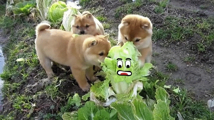 reallifedoodles, Lettuce Real Life Doodles GIFs