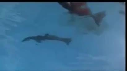 Watch and share Anti Captivity GIFs and Animal Cruelty GIFs on Gfycat