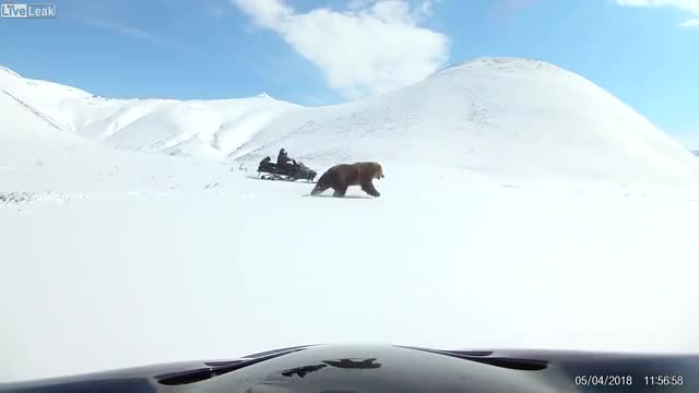 Watch Chasing a bear to get the best shot, WCGW? GIF on Gfycat. Discover more related GIFs on Gfycat