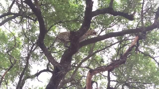Watch and share Nkoveni Climb GIFs by Londolozi Game Reserve on Gfycat