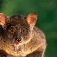 Watch and share Go Go Magic Possum! GIFs on Gfycat