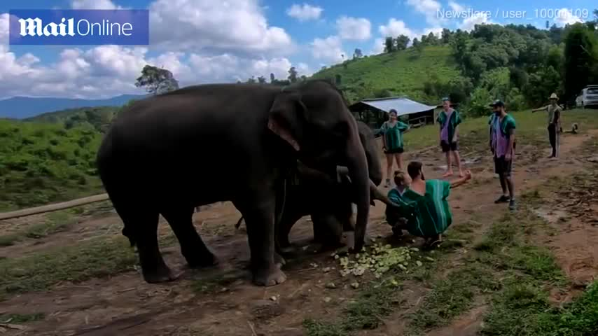 attention, baby elephant, baby elephant slaps mahout, elephant trunk, elephant trunk noise, elephant trunk sound, funny elephant, its trunk, selfie, tourists, I said no pictures! GIFs