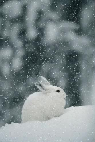 Watch and share Winter GIFs and Bunny GIFs on Gfycat