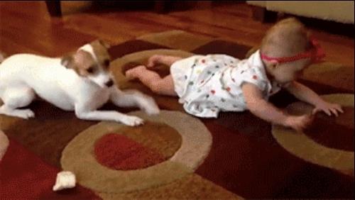 animalsbeingjerks, Smug dog mocks baby learning to crawl. (reddit) GIFs