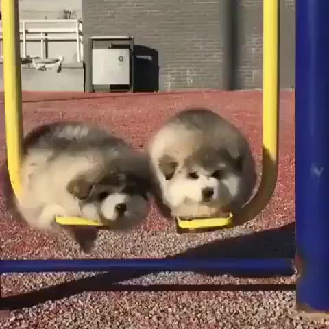 Watch and share Big Bois GIFs by Chapottle on Gfycat