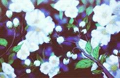 Watch Protect Mikaela Hyakuya  GIF on Gfycat. Discover more amagi brilliant park, kanie seiya, latifa fleuranza GIFs on Gfycat