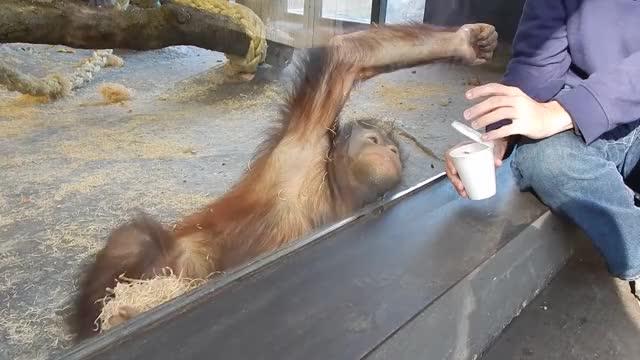 Monkey sees magic trick