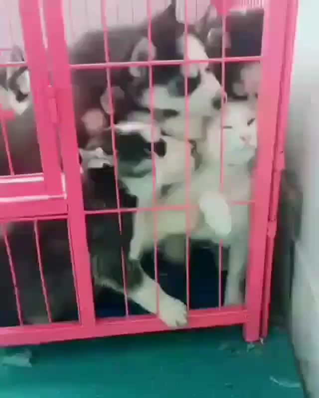 Watch and share Dogsofinsta GIFs and Ilovemydog GIFs by putrayanuar on Gfycat