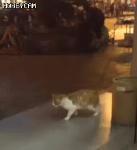 Watch catwalk GIF on Gfycat. Discover more related GIFs on Gfycat