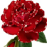 Watch red rose GIF on Gfycat. Discover more related GIFs on Gfycat