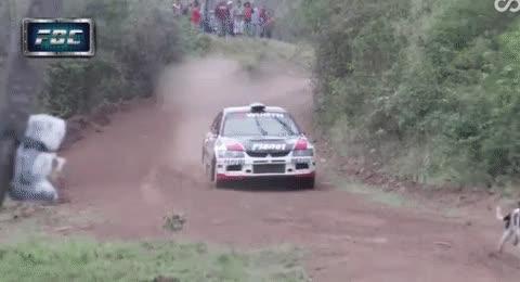 rally car GIFs