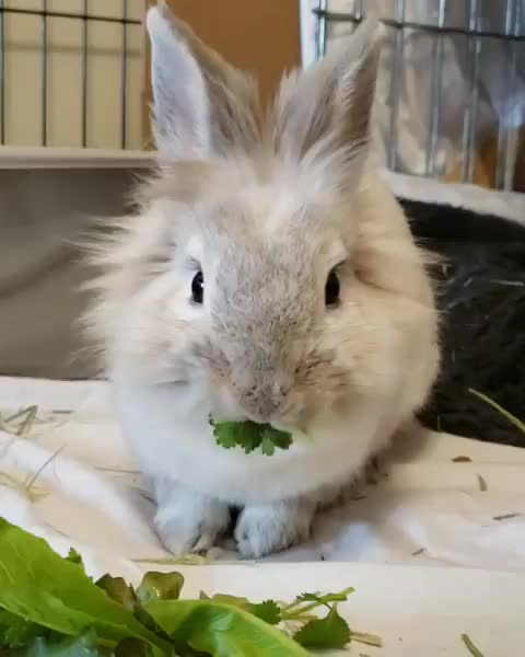 Watch and share Puff Loves Fresh Greens From Our Garden  GIFs on Gfycat