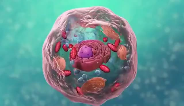 Watch and share Biology: Cell Structure GIFs on Gfycat