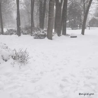 Watch and share Falling Snow GIFs and Snowfall GIFs by Myca Lynn Beller on Gfycat