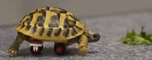 Watch and share Turtle LEGO Wheelchair Tum GIFs on Gfycat