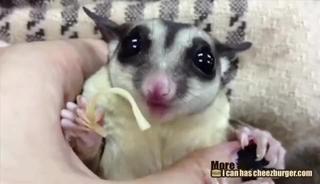 Watch and share Glider GIFs and Sugar GIFs on Gfycat