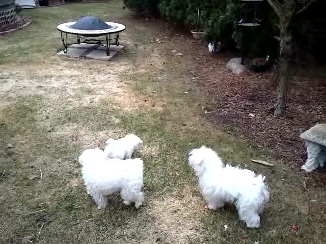 Watch and share WP_20140402_153948Z GIFs on Gfycat