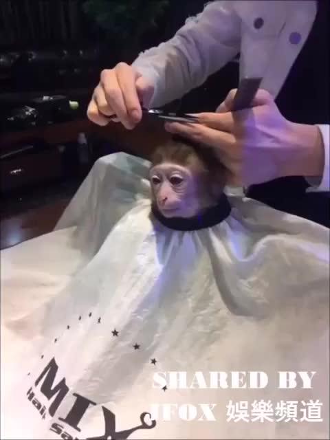 Watch and share Monkey-haircut GIFs on Gfycat