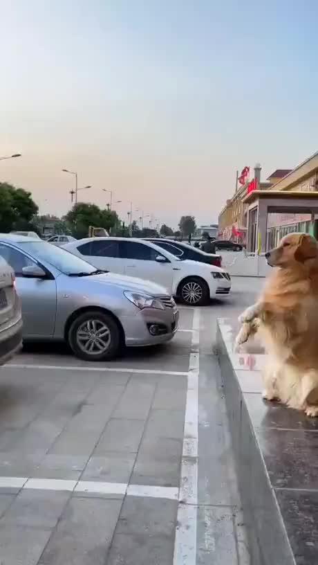 Doggo parking assistant gif