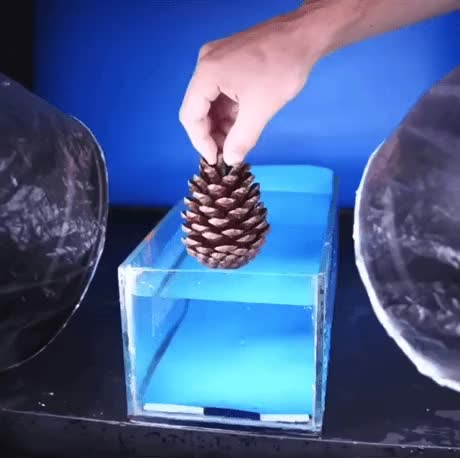 Watch and share Dropping A Cone Underwater In SloMo GIFs on Gfycat
